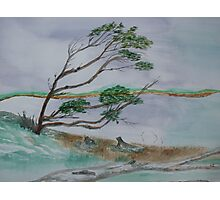 Powerful Winds Of Tierra Del Fuego Argentina  Photographic Print