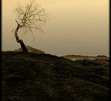 A Tree I by trbrg