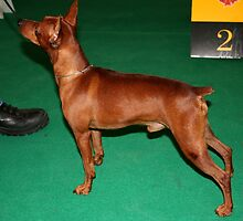 Funky Dobermann Pinscher