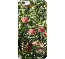 Ripe apples  on the tree iPhone Case/Skin