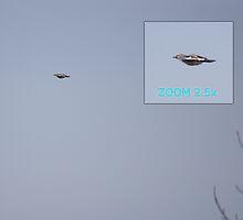 UFO ALERT! by Marko Palm