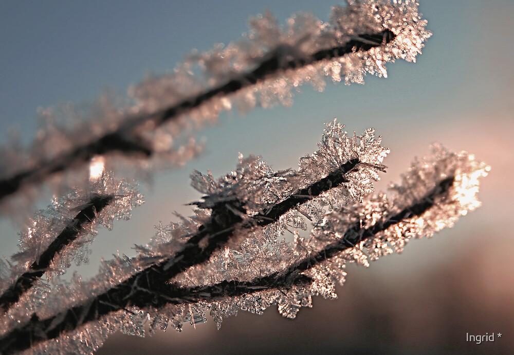 Frosty by Ingrid *