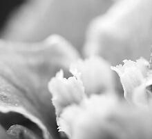 Iris by Susan Gottberg