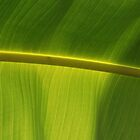 Banana Leaf - Uno by rabeeker