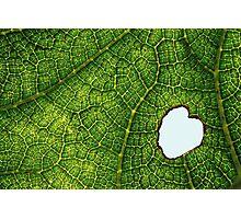 caterpillar meal Photographic Print