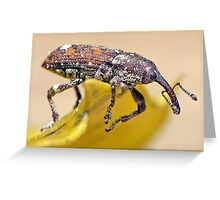 Weevil Knievel Greeting Card
