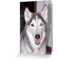 Young Siberian Husky Greeting Card