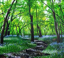 In bluebell heaven by Paula Oakley