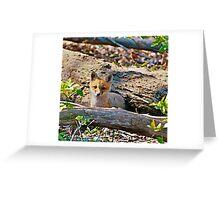 what a fox Greeting Card