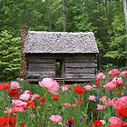 Little Cabin in spring time by olehippy13