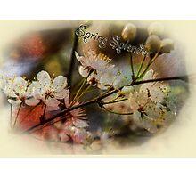 Spring Splendor - Spring Flowers Design Photographic Print