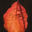 Autumn Leaves 3 by John Brotheridge