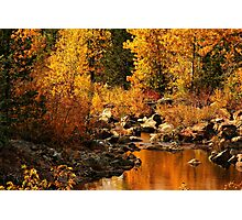 Sierra Gold Photographic Print