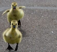 Watch Out... we're coming for ya! by Jen Wahl