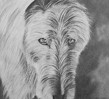 Zanna The Wolfie by Penny Edwardes