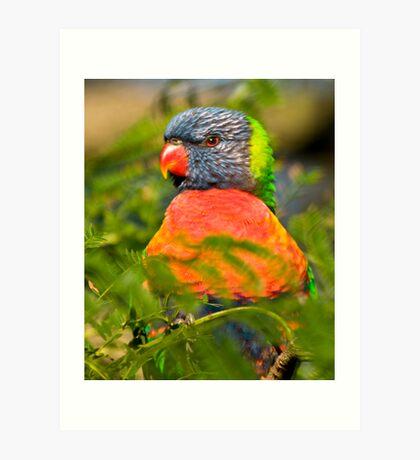 Posing Bird Art Print