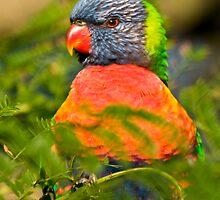 Posing Bird by Richie Wessen