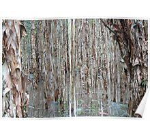 Flooded Eucalypt Woodland Poster