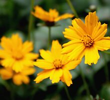 Yellow Flowers Macro by Maria Schlossberg