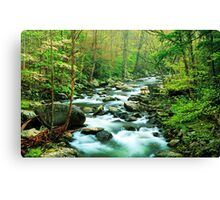 MIDDLE PRONG LITTLE RIVER,SPRING  Canvas Print