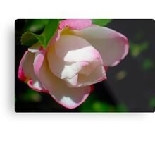 Camellia in Light and Shade Metal Print