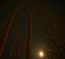 I look to the stars by Jena Ferguson