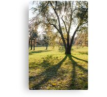 tree huge branches Canvas Print