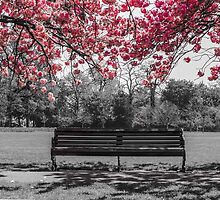 Cherry Blossom  by Claire Doherty