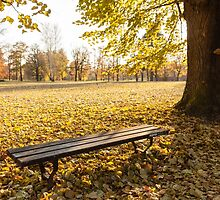 bench in autumn  by Artur Mroszczyk