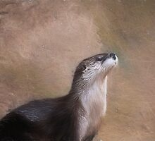 Otter by KathleenRinker