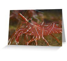 Cleaner shrimp - macro detail  Greeting Card