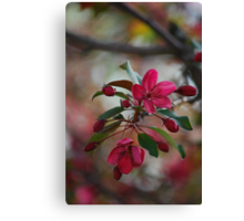 Bloomin' Pink Canvas Print