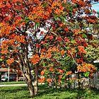 Orange Burst Tree Three by GolemAura