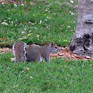 Sweet Little Squirrel by MichelleR
