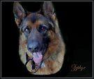 Zephyr - Portrait by naturelover
