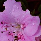 rain + flower=beautiful by Eamonn Doyle