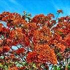 Orange Burst Tree Six by GolemAura