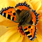 Butterfly by laurav
