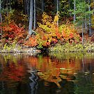 Colors Of Fall by Debbie Oppermann