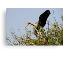 Painted Storks Canvas Print