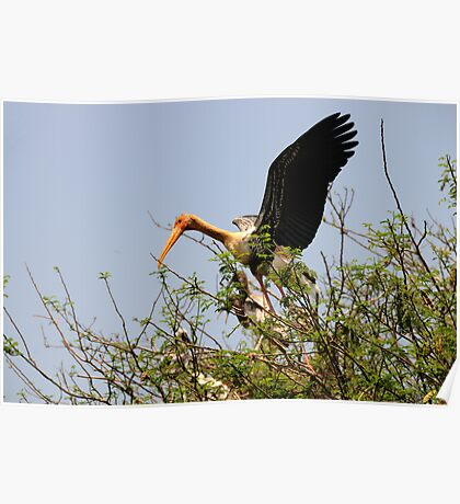 Painted Storks Poster