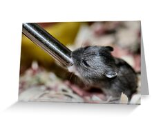 Baby Siberian Hamster Greeting Card