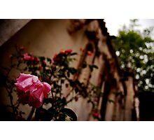 A flower graces my existence-The chapel at Quinta da Regaleira, Sintra Portugal Photographic Print