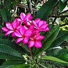 Strong Pink Saturate One by GolemAura