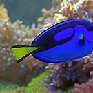 Blue fish:)) by misiabe80