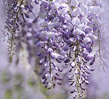 Wisteria Waves by Jacky Parker