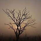 Foggy Morning Silhoutte by Matt  Williams