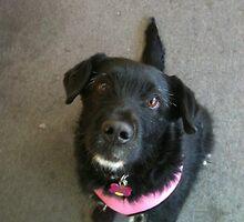 Scruffy Black Dog by silverdragon