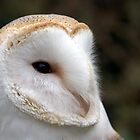 Barn Owl by robspics