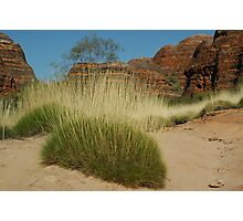 Spinifex in Purnululu Photographic Print